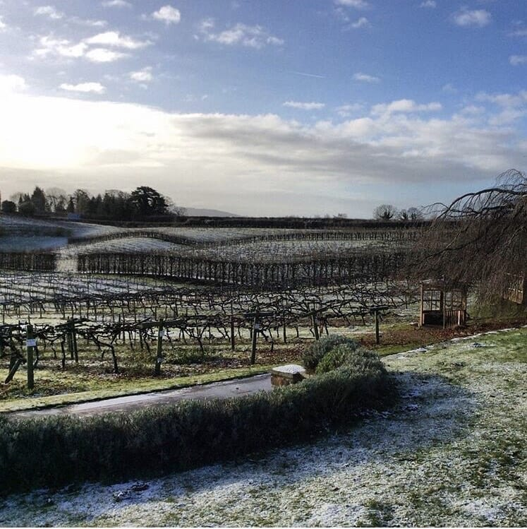Three Choirs Vineyards in the frost